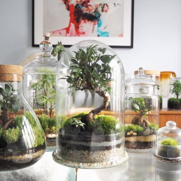 terrarium wink
