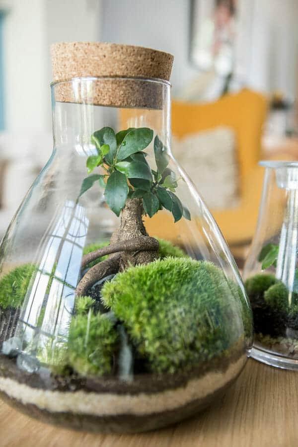 Créez et fabriquez votre terrarium de plantes!