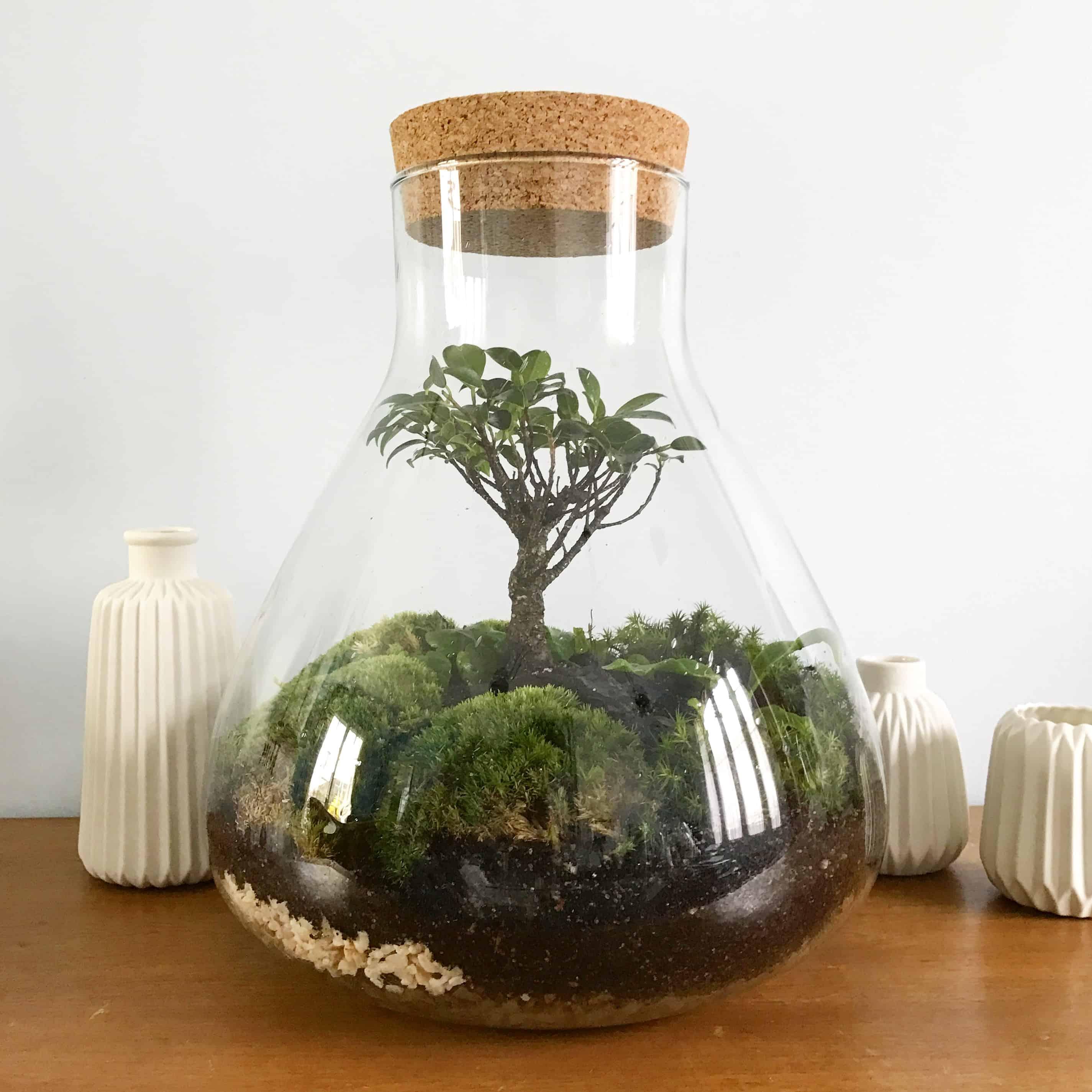 terrarium deco. Black Bedroom Furniture Sets. Home Design Ideas