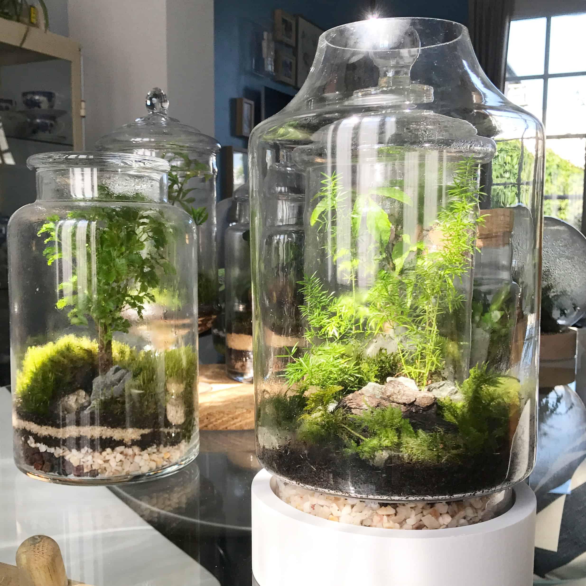 cr ez et fabriquez votre terrarium de plantes. Black Bedroom Furniture Sets. Home Design Ideas